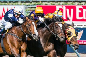 Mister Impatience may contest the same 2014 spring racing path as stablemate Araldo