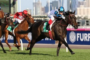 Amphitrite, above, scores a convincing win in the Edward Manifold Stakes at Flemington. Photo by Ultimate Racing Photos.