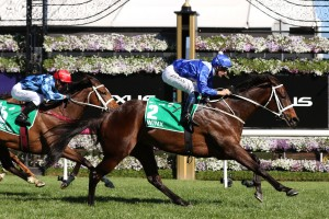 Youngstar, above with red cap, is one of the main chances in the 2018 Caulfield Cup after running second to Winx, above, in the Turnbull Stakes. Photo by Ultimate Racing Photos.