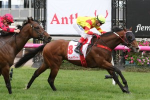 Snitzepeg recorded an upset win in the Antler Luggage Stakes at Flemington this afternoon. Photo by: Ultimate Racing Photos