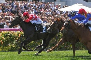 Sheidel will return to Perth to contest the Group 1 Winterbottom Stakes on November 26th. Photo: Ultimate Racing Photos