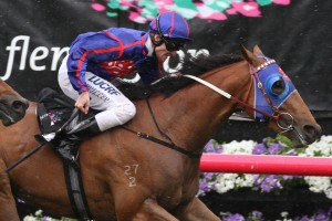 Mahuta is our pick to take out the 2015 Sandown Guineas. Photo: Ultimate Racing Photos