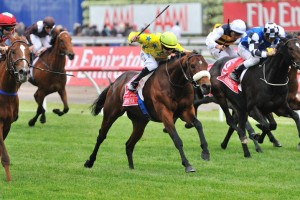 Geelong Cup Tips & Odds - Ladbrokes.com.au
