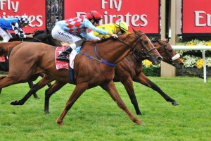 Red Cadeaux will line up for his fifth tilt at the Melbourne Cup on Tuesday. Photo: Taron Clarke
