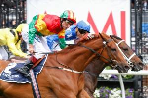Happy Trails is in the right form to defend his Mackinnon Stakes title at Flemington on Saturday. Photo: Sarah Ebbett