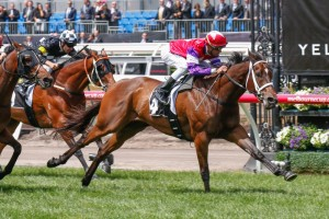Hucklebuck is the Races.com.au tip to win Saturday's Group 1 Futurity Stakes at Caulfield. Photo: Sarah Ebbett