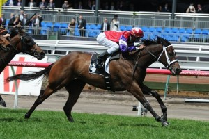 The 2015 Goodwood will be Hucklebuck's sole race before the spring carnival.