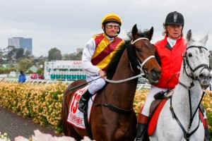 Preferment will be partnered by Damien Oliver in the 2015 Australian Derby. Photo: Sarah Ebbett
