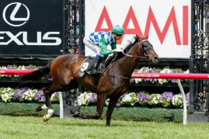 Signoff is aiming to become the second horse since 1983 to complete the Lexus Stakes/Melbourne Cup double.