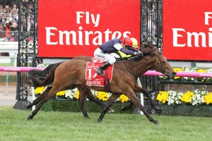 Last year's winner Almandin, above, is the favourite for the 2017 Melbourne Cup at Flemington. Photo by Ultimate Racing Photos.