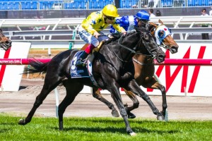 Side Glance offers punters exceptional value for money in 2014 Cox Plate betting markets. Photo: Race Horse Photos Australia