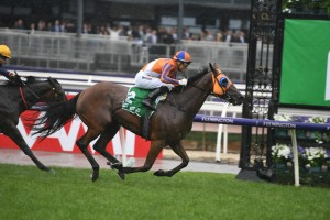 Melody Belle, above, is among the nominations for the Missile Stakes at Rosehill. Photo by Steve Hart.