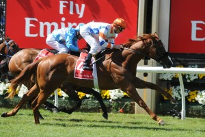 Concealer is the Races.com.au tip win Saturday's Group 3 Quezette Stakes at Caulfield. Photo: Steve Hart