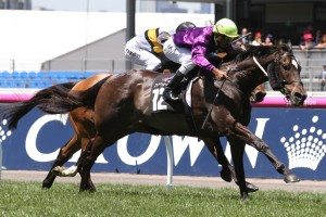 The Chairman could be set for an appearance in the 2016 Werribee Cup. Photo: Ultimate Racing Photos