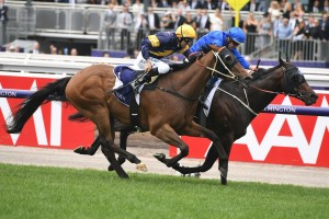 Ranier, in the royal blue colours on the fence, wins The Carbine Club Stakes at Flemington. Photo by Steve Hart.