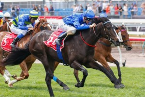 Thurlow ran second to Antelucan (pictured) in her racing debut on Melbourne Cup Day. Photo: Sarah Ebbett