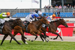 Sysmo (inside) will represent trainer Tony McEvoy in the 2014 Ballarat Cup this Saturday.