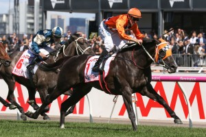 Sydney Autumn Racehorse to Watch at Ladbrokes: Ace High