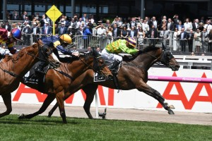 Cismontane, above in pale green colours, is into the Melbourne Cup after winning the Lexus Stakes at Flemington. Photo by Steve Hart.