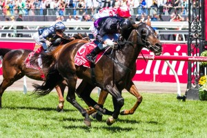 Fiorente has won the 2013 Melbourne Cup at Flemington Racecourse.