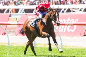 Mujadale is likely to target the 2015 Mornington Cup. Photo: Race Horse Photos Australia