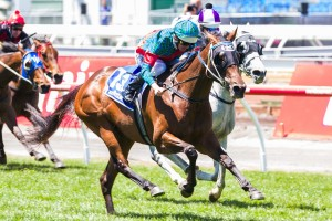 Plucky Belle has been confirmed in the 2015 Coolmore Classic final field. Photo: Race Horse Photos Australia