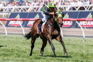 Vain Queen is currently rated outright favourite to win Saturday's Robert Sangster Stakes. Photo: Sarah Ebbett