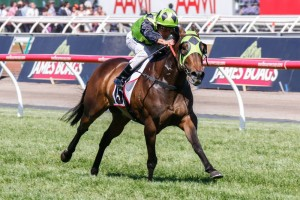 Vain Queen is set to resume in the Oakleigh Plate at Caulfield this Saturday.