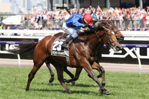 Cross Counter, above, is set to defend his Melbourne Cup title at Flemington. Photo by Ultimate Racing Photos.