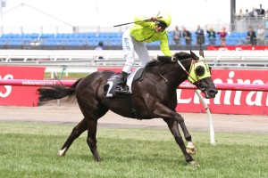 Dandino remains clear favourite in 2015 Zipping Classic betting markets. Photo: Ultimate Racing Photos
