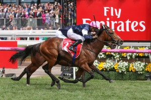 Last year's Melbourne Cup winner Rekindling, above, is among the nominations for the 2018 Australian Cup at Flemington. Photo by Ultimate Racing Photos.