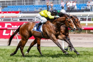 Lord Aspen is a leading chance for success in the 2014 Sandown Guineas. Photo: Sarah Ebbett