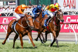 Lankan Rupee (inside) remains the world's best sprinter despite losing the Darley Classic to Terravista (outside).