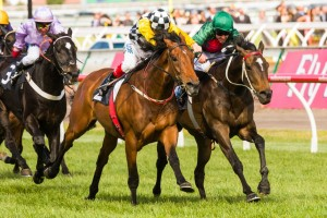 Precedence and Sertorius will lock horns again in the Group 2 Zipping Classic at Caulfield on Saturday.