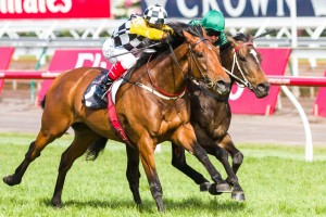 Precedence has been confirmed in the 2015 Moonee Valley Gold Cup final field. Photo: Race Horse Photos Australia