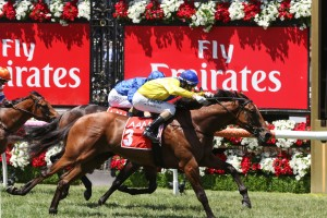 Run Naan, above in yellow colours, is among the nominations for the Ladbrokes Blue Diamond Preview for the colts and geldings at Caulfield. Photo by Ultimate Racing Photos.