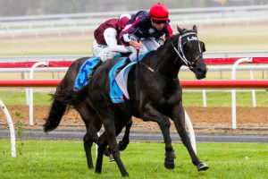 Gamblin' Guru will return to racing in this weekend's Listed Penny Edition Stakes