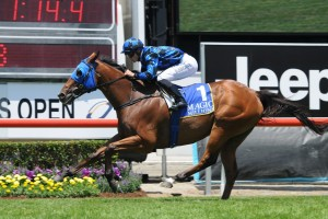 Buffering made it two wins on the trot with a comfortable win in the 2016 Magic Millions QTIS Plate. Photo by: Steve Hart