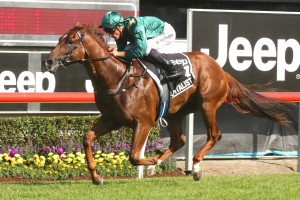Team Snowden are thrilled with Capitalist ahead of Saturday's Group 1 Golden Slipper at Rosehill. Photo: Daniel Costello