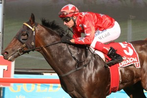 Dances On Stars is primed for a good first-up run in Saturday's Razor Sharp Handicap at Randwick. Photo: Daniel Costello