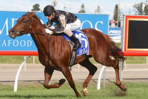 Srikandi is outright favourite for success in the 2014 Moreton Stakes