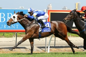 Tukiyo is one of two headliners of the Magic Millions Fillies & Mares Handicap this Saturday.