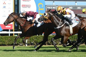 Most Important, above in maroon and gold colours with white sleeves, will line up in the 2018 Victory Stakes at Doomben. Photo by Daniel Costello.