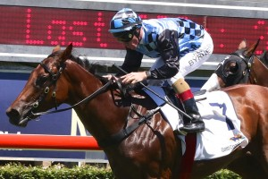 Zelady's Night Out will return to racing in Saturday's Group 2 Silver Shadow Quality at Royal Randwick. Photo: Daniel Costello