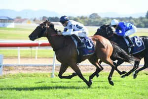 Irithea, above winning at Hawkesbury last year, was in the winner's stall again at Rosehill after winning the Dark Jewel Classic. Photo by Steve Hart,.