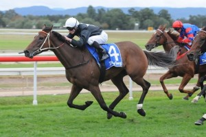 Leebaz has done enough to win the 2014 Hawkesbury Gold Cup