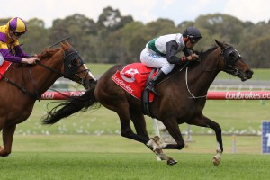Fanatic, above, will spear head the chances of Lindsay Park in the 2018 Adelaide Cup at Morphettville. Photo by Ultimate Racing Photos.