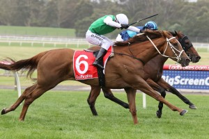 Life On The Wire, above, is the early favourite for the Bow Mistress Trophy at Hobart. Photo by Ultimate Racing Photos.