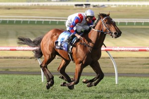 Ability will resume in the Group 1 Moir Stakes at The Valley on Friday week. Photo: Ultimate Racing Photos