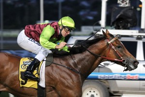 Fast Cash will be tested over 1300 metres at Sandown in the Manfred Stakes.